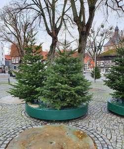 [lokal Salzgitter] Stadt Salzgitter verschenkt Weihnachtsbäume ab 23.12.