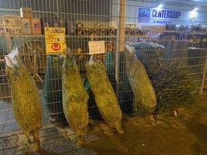 Weihnachtsbäume (1,50m groß) gratis am Centershop Andernach