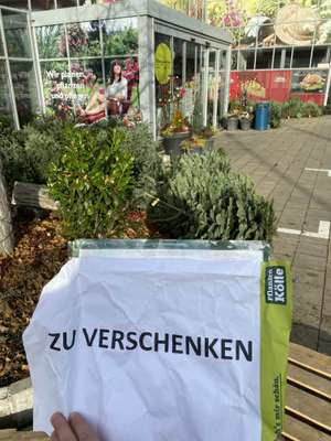 Stuttgart lokal: Weihnachtsbäume zu verschenken Pflanzen Kölle
