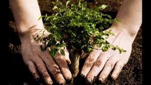 Easy 1 Baum kostenlos pflanzen | moretrees.eco für die ersten 500.000 Anmeldungen. (Seite auf Englisch)