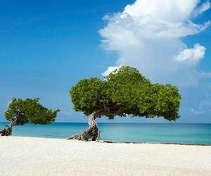 Flüge: Aruba / Karibik (Okt-Feb) Hin- und Rückflug mit Air Canada von Frankfurt ab 366€ inkl. Gepäck