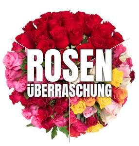 41 Rosen in zufälligen Farben in rot, rot/pink oder bunt