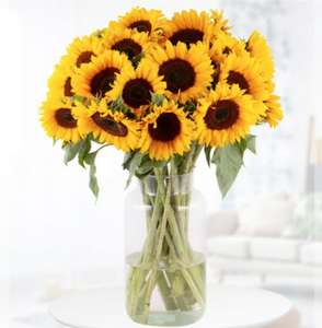 20 Sonnenblumen (60cm Länge) inkl. Lieferung und Grußkarte