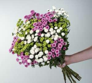 Chrysanthemenbund Blumen für 10 € inkl. Versand (für Neukunden)