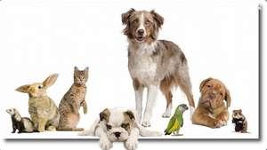 Übersicht der Tierfutterangebote der KW 39 / 2021