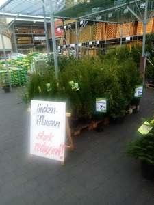 Lokal - [Bauhaus Berlin Tempelhof Alboinstr.] Garten-Pflanzen Hecken Palmen Abverkauf 50% bis 70%