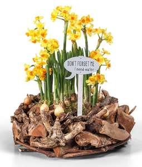 20% Oster-Rabatt und versandkostenfrei auf Blumen von real, z.B. Gärtnerglück