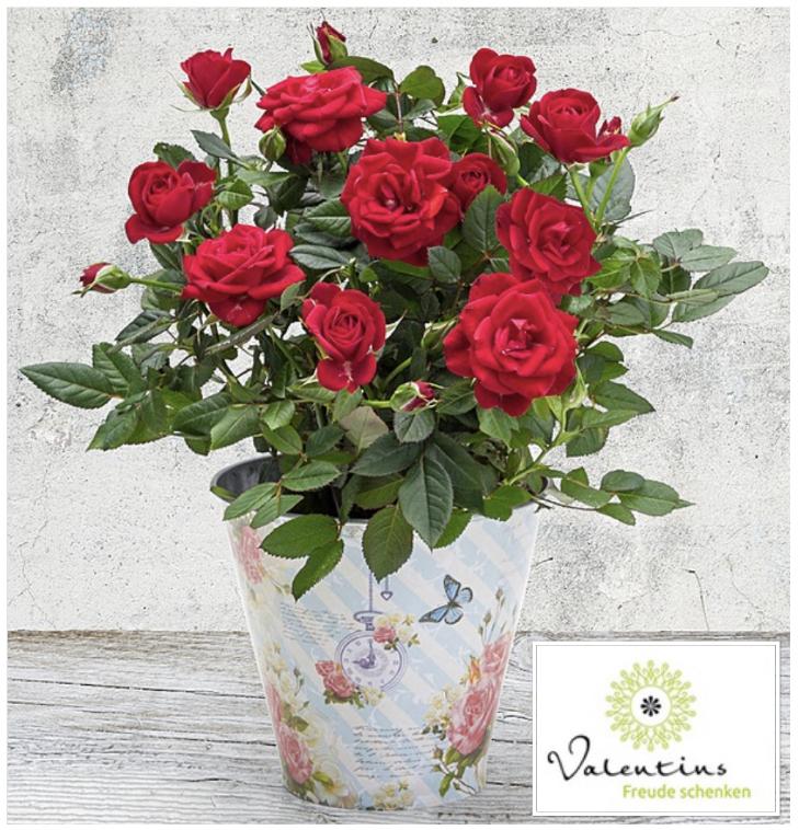 13€ Valentins Gutschein für nur 5,20€ - z.B. Frühlingsgruß für 12,18€ oder Rosen im romantischen Topf für 13,18€ + 24% Shoop!