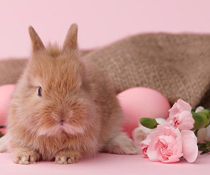 15% Frühbestellerrabatt auf alle Osterprodukte ab 19,99€ bei Blume2000.de