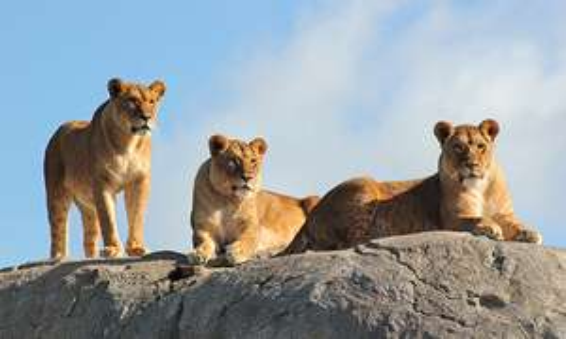 Wildlands Zoo Emmen (NL) Eintritt für 15 € statt 22,50 € gültig bis 31.12.2019 - endet heute