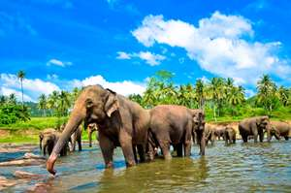 Sri Lanka Rundreise + Baden ab 999€ p.P. mit Emirates-Flügen und Extras - 12 Nächte