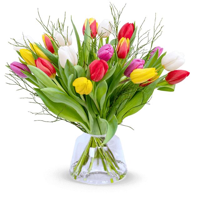 Tulpenliebe (20 bunte Tulpen mit Heidelbeeren, Länge: 40 CM, 7-Tage Frischegarantie)