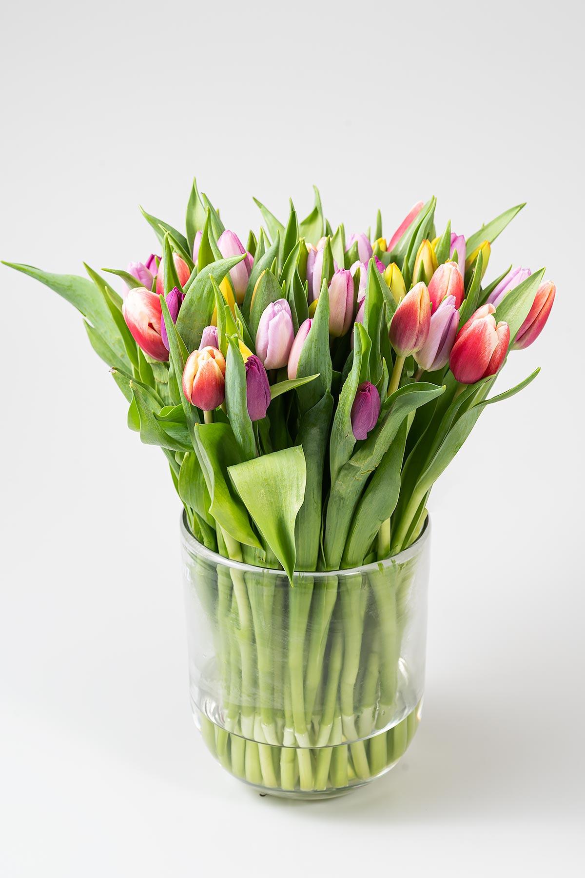 50 bunte Tulpen (oder andere Farbvarianten) für 24,99€ inkl. VSK