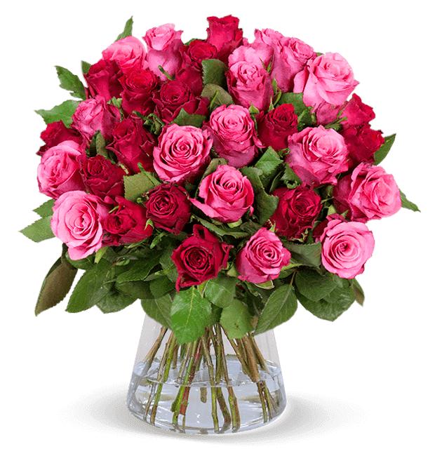 """Rosenblumenstrauß: 35 Rosen """"Romantic-Roses"""" (50cm Länge, 7-Tage-Frischegarantie, Lieferbar 15.05-22.05)"""