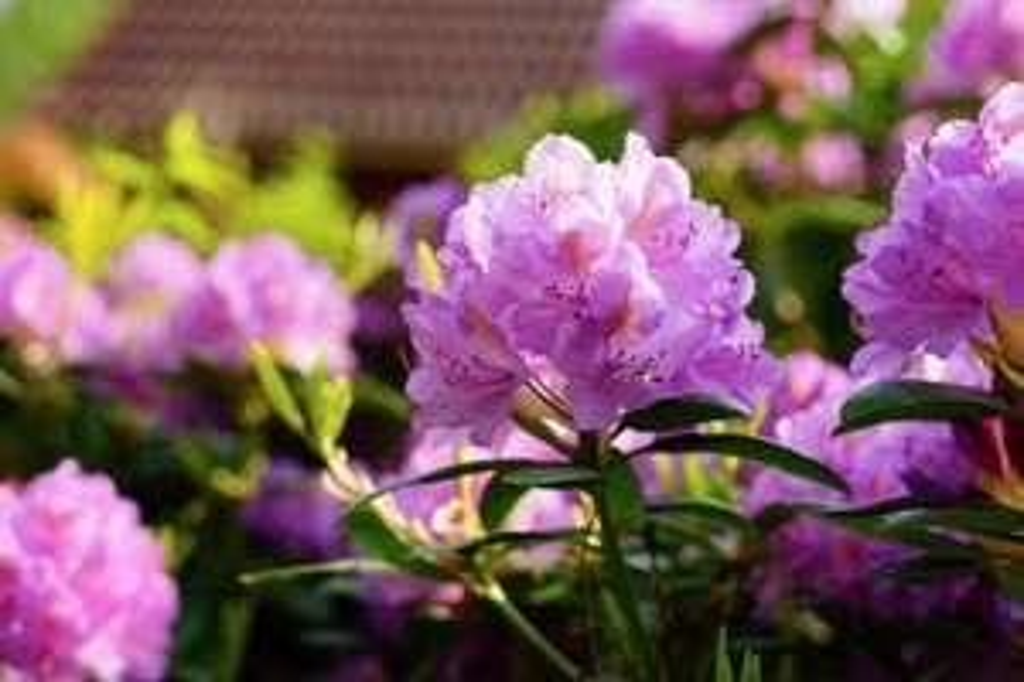 mydealz Garten,- Balkonsaison Frühsommer, Wochenübersicht Nummer 10