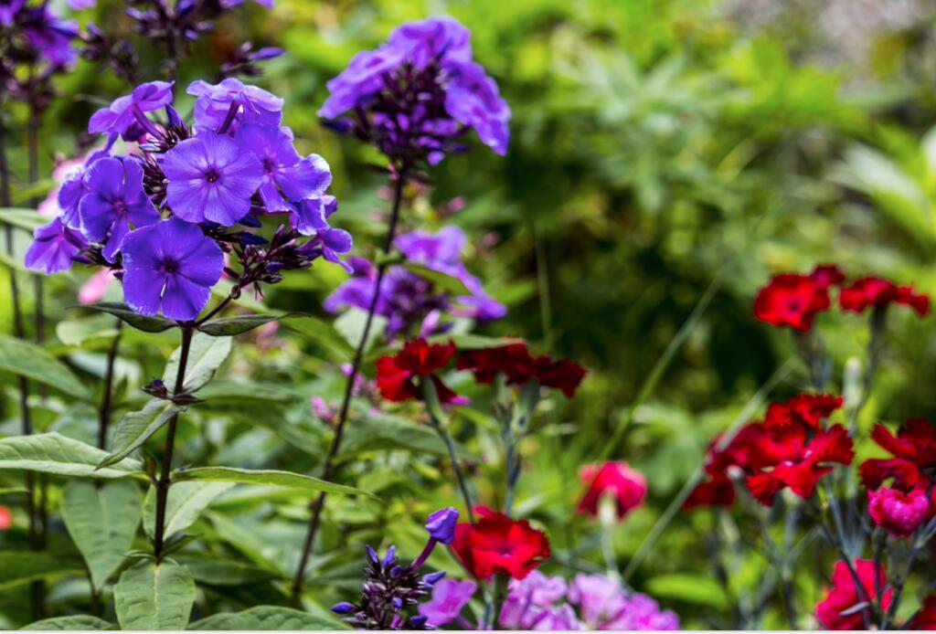 mydealz Garten,- Balkonsaison Frühsommer, Wochenübersicht Nummer 11