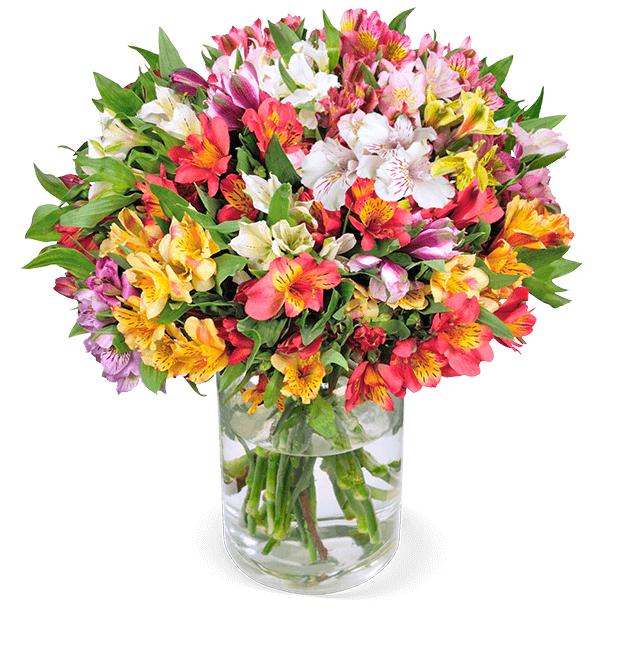 Strauß mit 41 Inkalilien (bis zu 8-10 Blüten pro Stiel, 50cm Länge, 7-Tage-Frischegarantie)