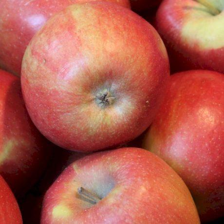 Gratis Apfelbäume zu der Bestellung