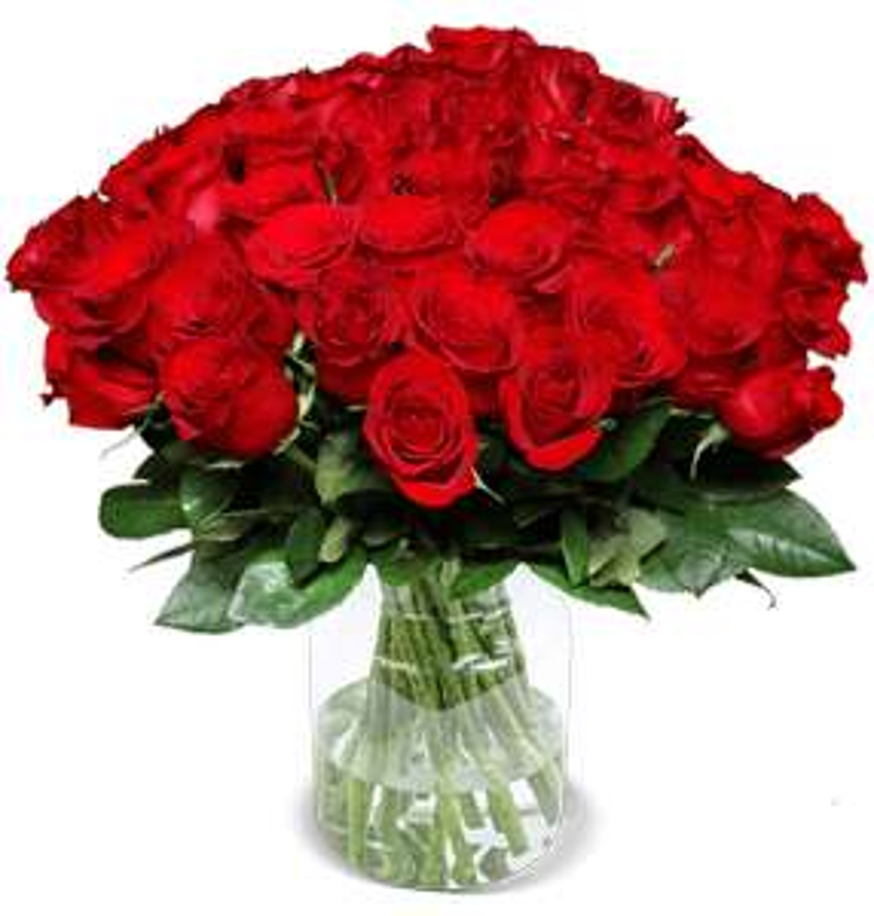 44 rote Rosen, XXL Rosenpaket, 7-Tage-Frischegarantie