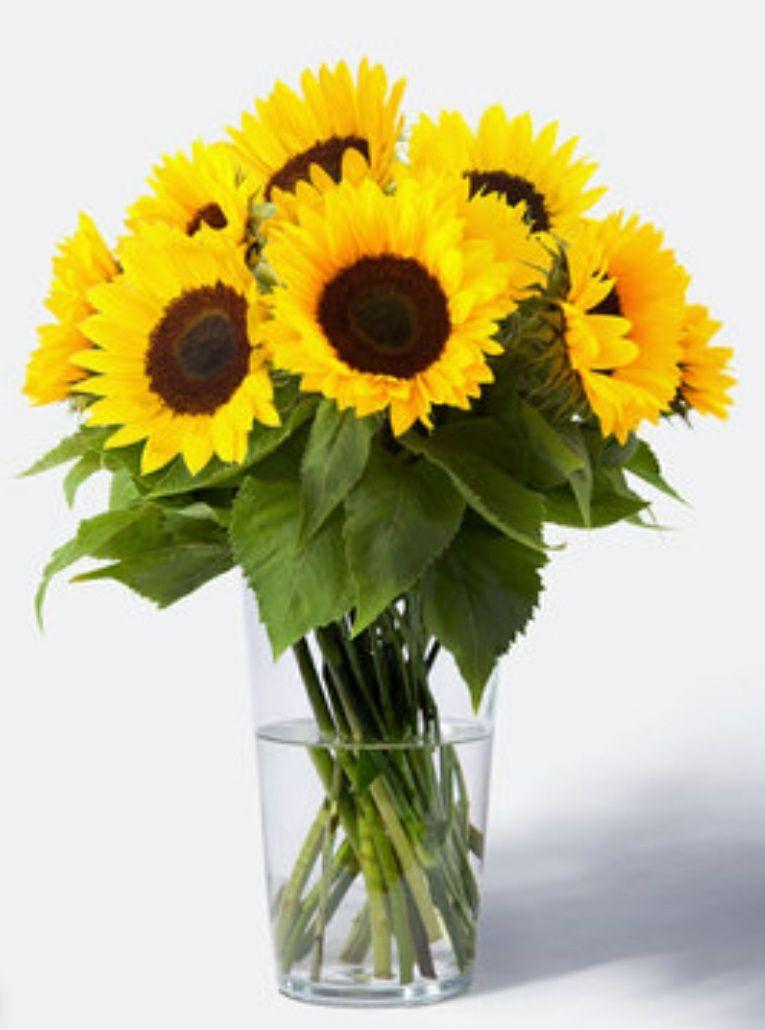 10 Sonnenblumen für 10 € inkl. Versand (evtl. 12% Corporate Benefits + 14% Cashback möglich)