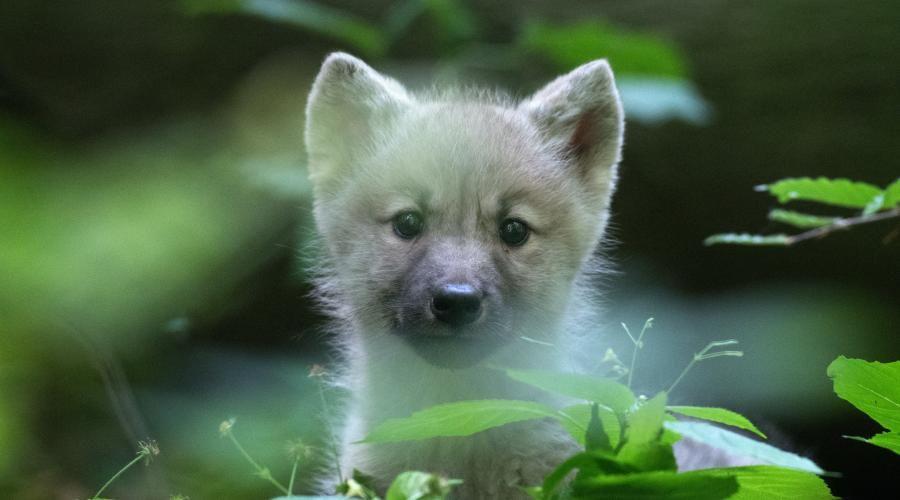 Gratis Eintritt für Kinder bis 14 Jahre in alle Tierparks und Zoos Mecklenburg-Vorpommerns am 30.07.21