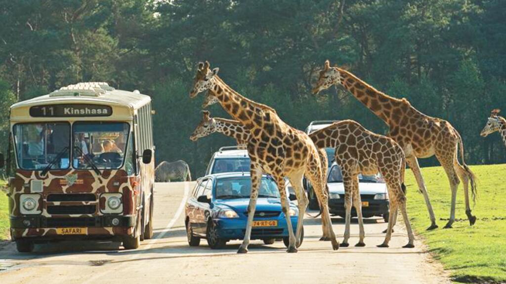 Safaripark Beekse Bergen in den Niederlanden: Tagesticket + 2 Nächte im Van der Valk Vught inkl. Frühstück für 260,60 € für 2 Personen