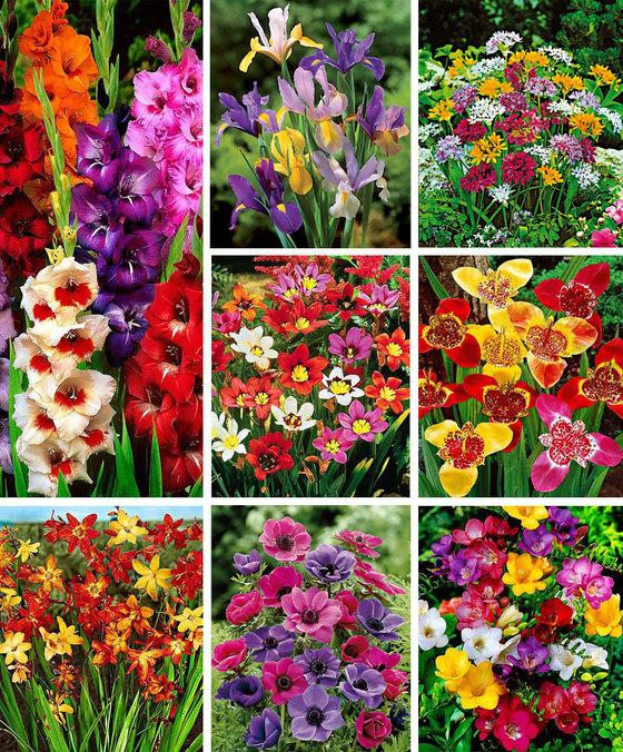 [Bakker.com] 550-teiliges Blumenzwiebel-Paket und Gratis Garten Laterne bekommen